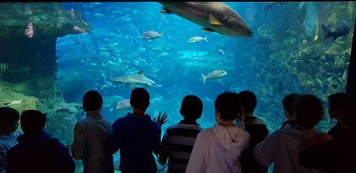 Donostiako aquarium-a bisitatzen